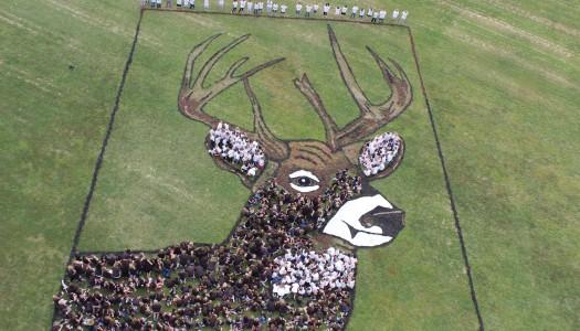 Deer Park Sky Art