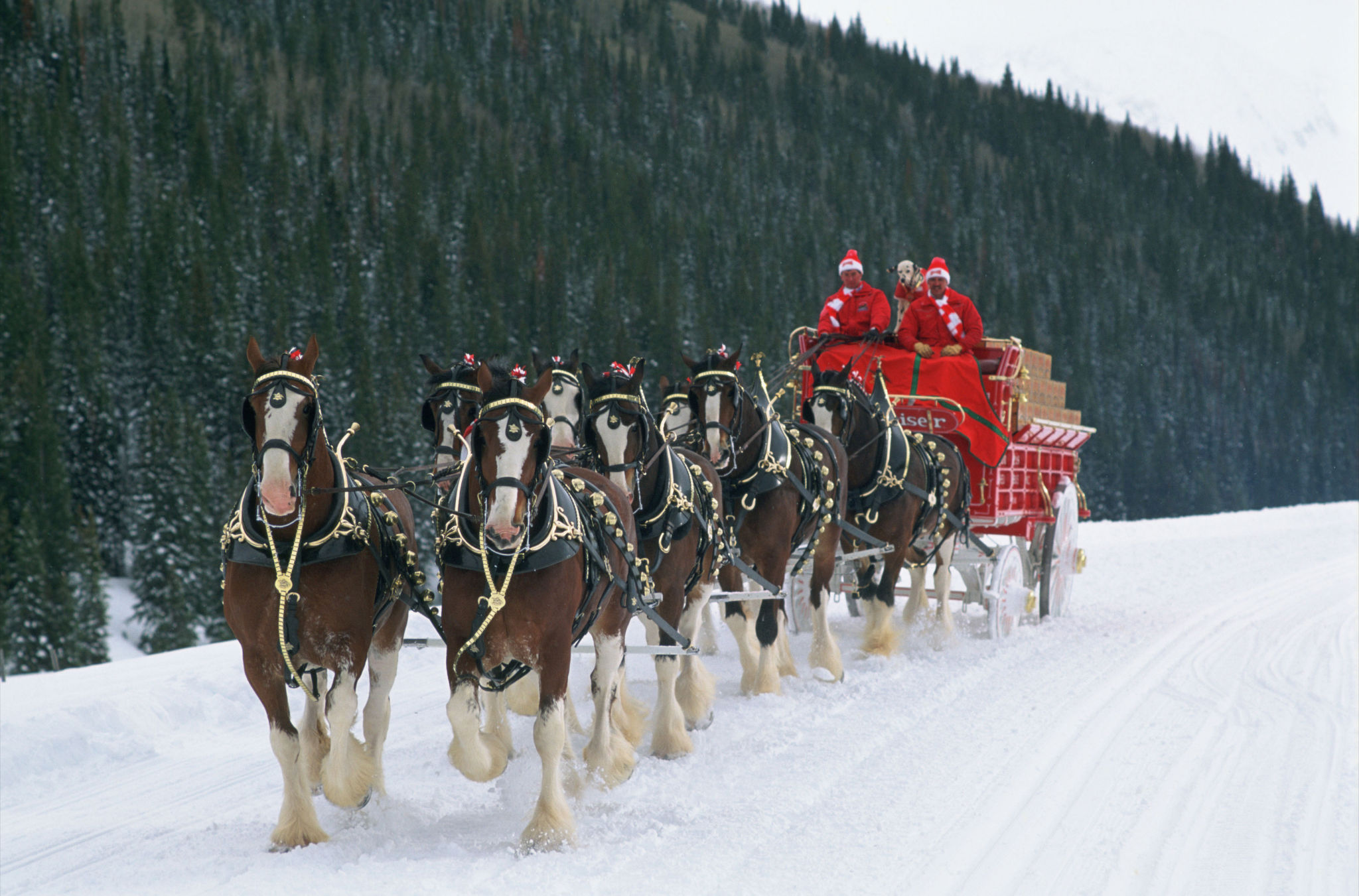 Anheuser-Busch Clydesdales to Join 2014 Christmas Parade ...