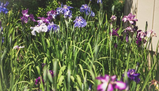 Upcoming Events at Western KY Botanical Garden